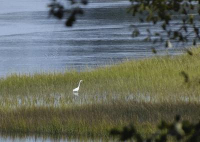 edit-egret